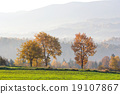 beautiful autumn trees, autumn Landscape. 19107867
