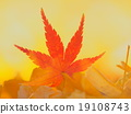 Autumn leaves and ginkgo 19108743