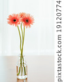 Gerbera on wooden table in room.Fucus on flower (Vintage filter 19120774