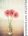 Gerbera on wooden table in room (Vintage filter effect used) 19120788