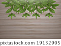 Leafs on wood background vector design 19132905