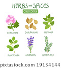 Herbs and spices collection 8 19134144