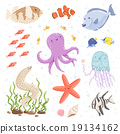 章鱼 水母 鱼 19134162