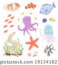 Marine life 19134162