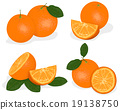 Orange fruit isolated on white background 19138750