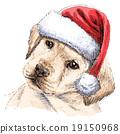 Labrador Retriever 19150968
