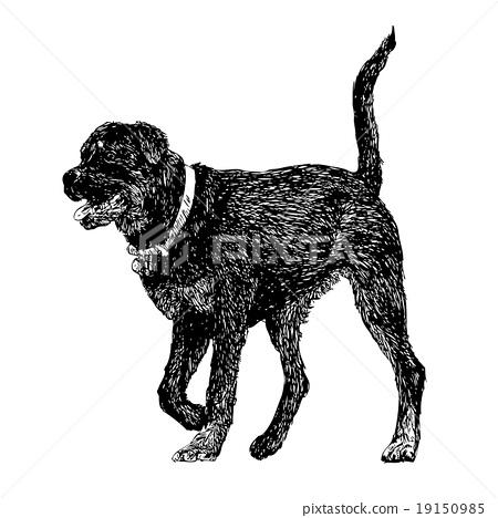 Rottweiler 19150985