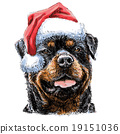 Rottweiler with santa claus hat 19151036
