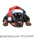 Rottweiler with santa claus hat 19151044