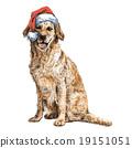 Labrador Retriever 19151051