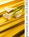 색상 19151802
