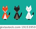 Red Fox, Arctic Fox, Brown Fox Full Body 19153950