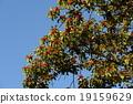 열매, 결실, 나무열매 19159629