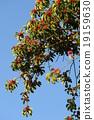 열매, 결실, 나무열매 19159630