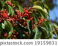 열매, 결실, 나무열매 19159631