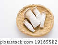杏鮑菇 收穫 蔬菜 19165582