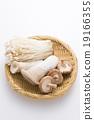 蘑菇 蔬菜 杏鮑菇 19166355