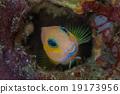 魚 水下 野生生物 19173956