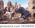 Karateka fights with elephant 19206892