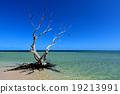 海洋 海 蓝色的水 19213991