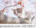 貓 貓咪 小貓 19216917