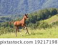 equine, horse, pasture 19217198