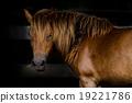 horse 19221786