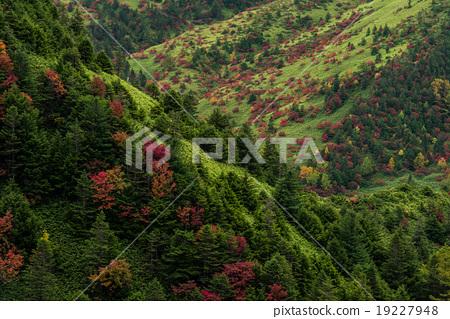 Autumn leaves of Shiga Kogen 19227948