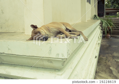 Homeless dog is sleeping on the floor in a temple 19228619