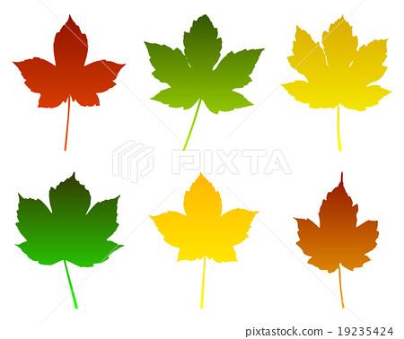 Maple leaves 19235424
