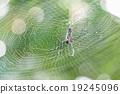 Spider 19245096