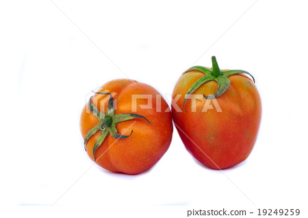Fresh tomatoes with water drops. Isolated on white 19249259