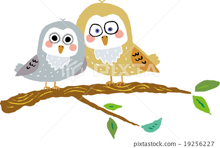 A couple of owls 19256227