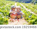boy, farm, little 19259466