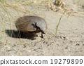 armadillo, wildlife, animal 19279899