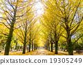 【东京】Ginkgoega Park的银杏树 19305249