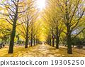【东京】Ginkgoega Park的银杏树 19305250