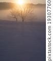 dawn, frozen, field 19307760