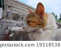 แมว,สัตว์,ภาพวาดมือ สัตว์ 19318536