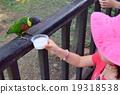 นก,ภาพหลัง,นกกระตั้ว 19318538