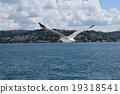 นกนางนวล,มหาสมุทร,นก 19318541