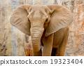 Elephant 19323404