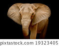 Elephant 19323405