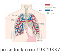 Structure of lung (blood vessel · lymph node) (text) 19329337