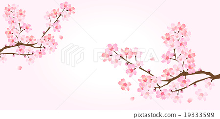 Sakura spring flower background 19333599