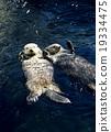 海洋动物 海獭 朋友 19334475