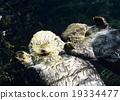 海洋动物 海獭 朋友 19334477