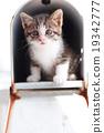小猫 猫咪 猫 19342777