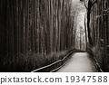 Bamboo Grove 19347588