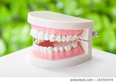치아 모형 녹색 배경 19356349